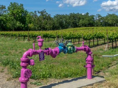 In the News (purple pipe/vineyard)