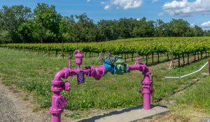 In the News (purple pipe/vineyard)
